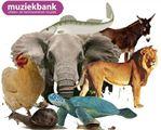 verschillende dieren